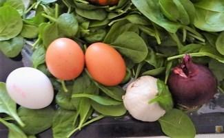 Spinat mit Kürbis und Ei (13)