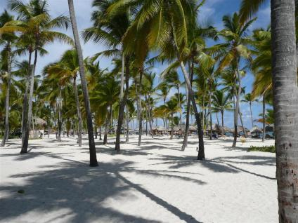 The beach was picture perfect among the trees and shade :)