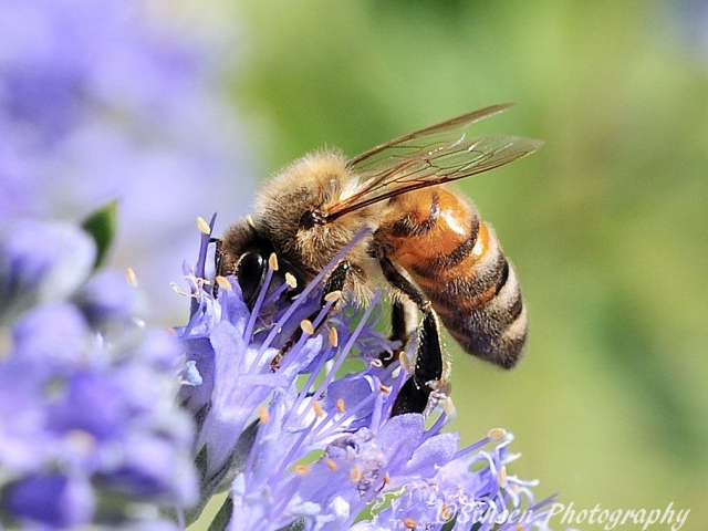 Bee 001