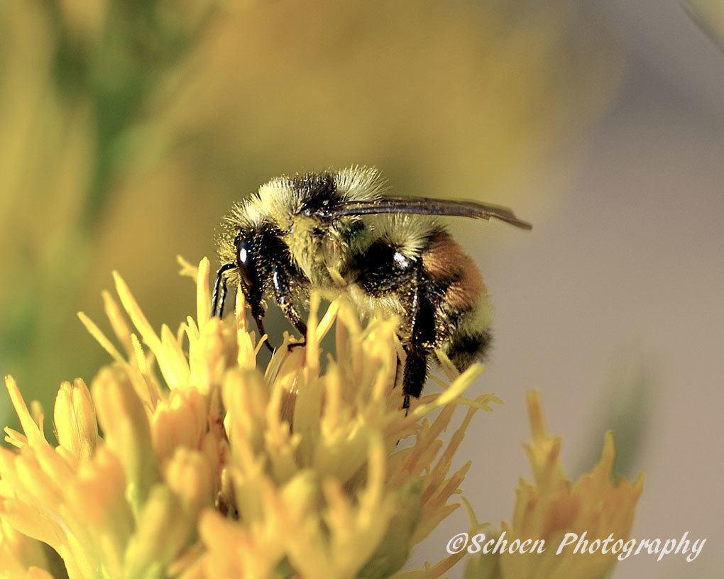 Bee 003