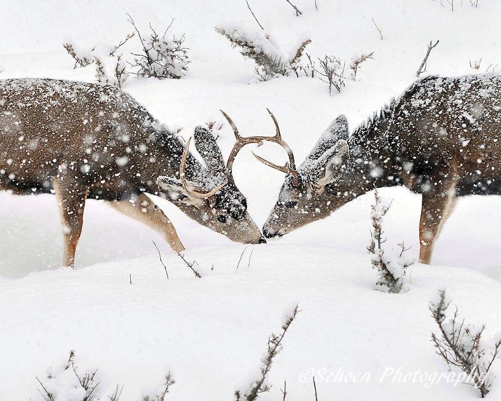 Deer 003