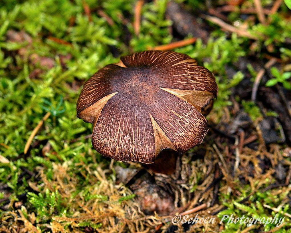 Mushroom 001
