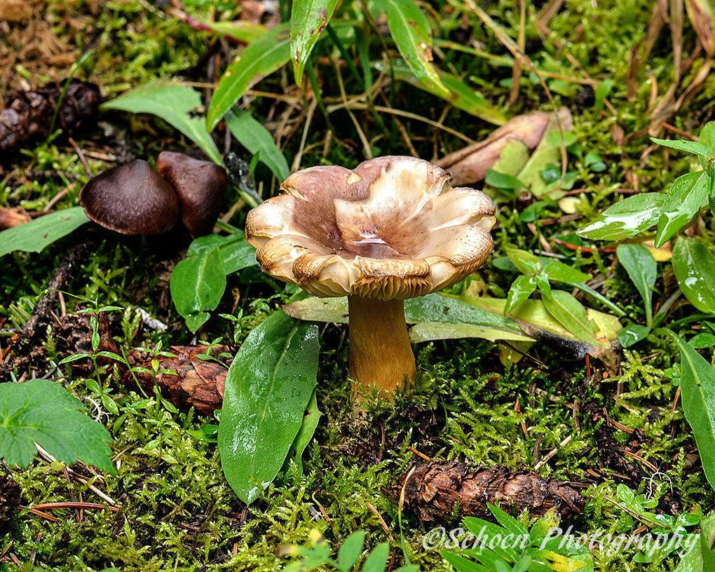 Mushroom 002