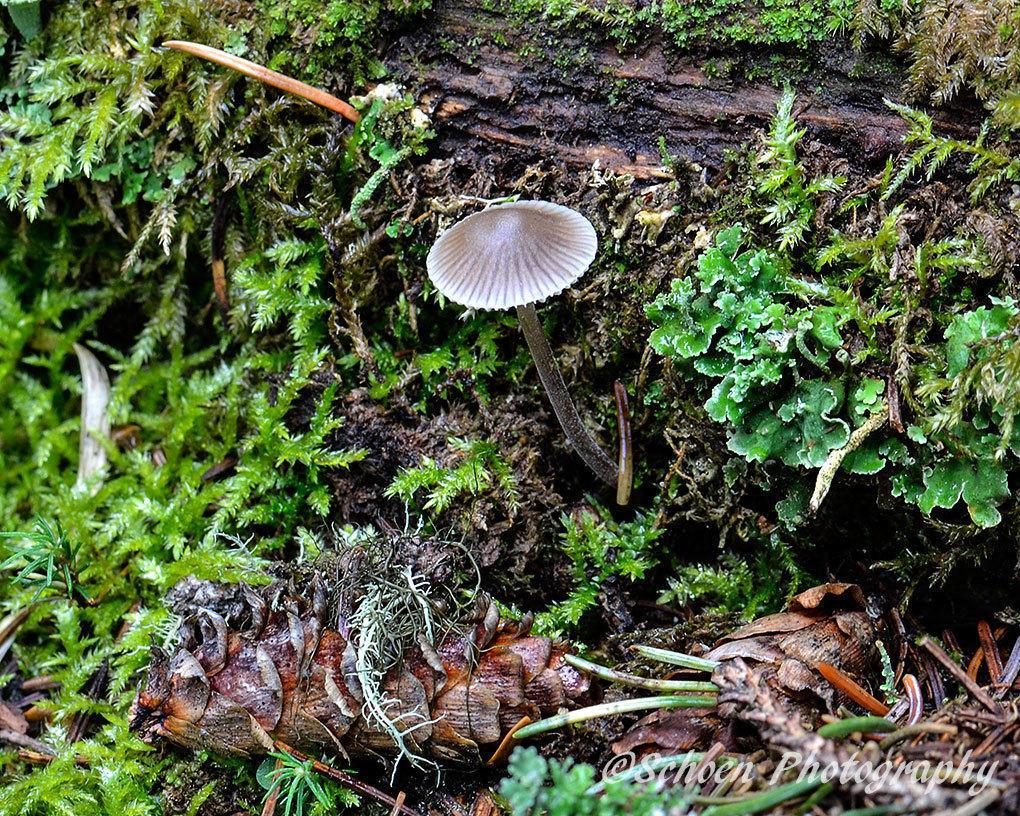 Mushroom 020