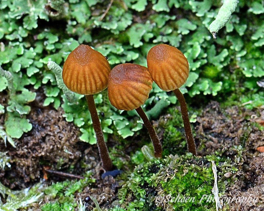 Mushroom 021