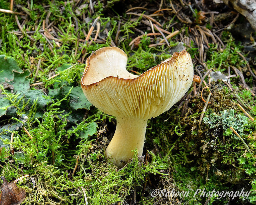 Mushroom 027