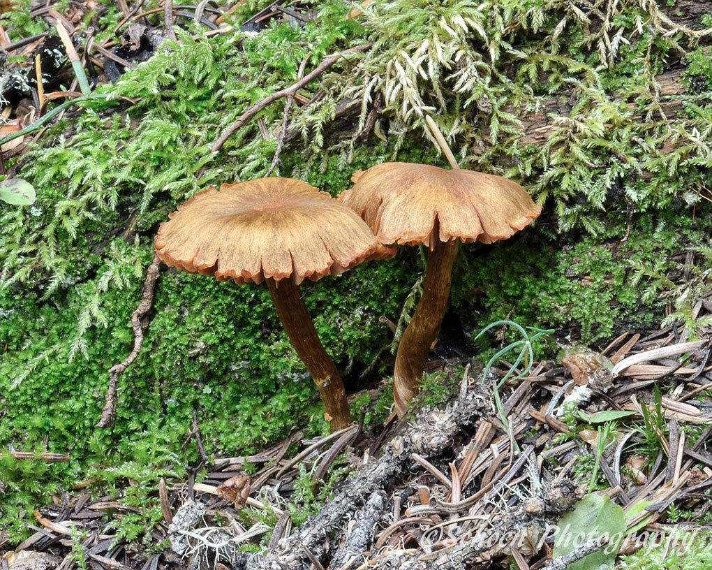 Mushroom 036