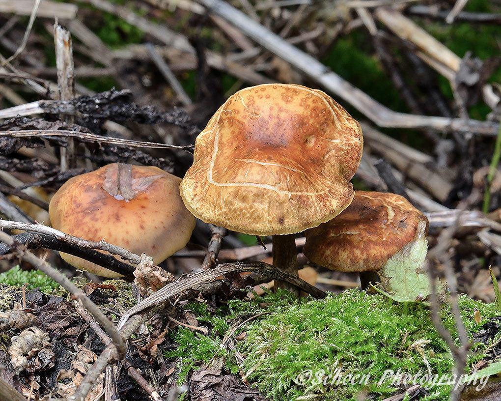 Mushroom 042
