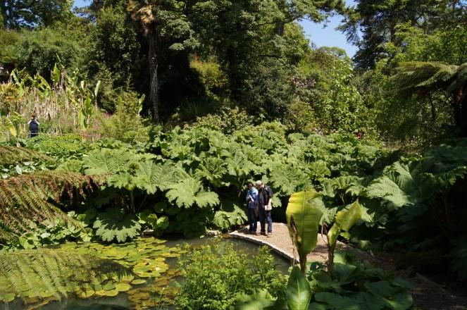 Der subtropische Dschungel im Cornwall.