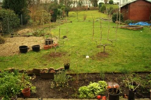 """Die beiden Spalierobstbäume Apfel """"Goldparmäne"""" (li) und """"Gellert"""" Butterbirne (re) sind im Boden."""