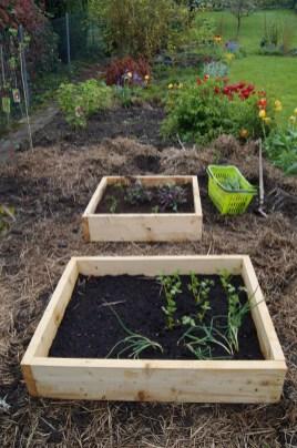 Frisch gepflanzt