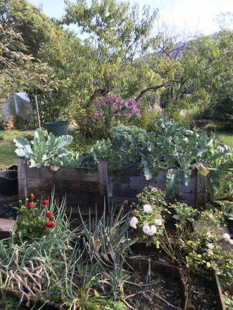 Hochbeet vorm Pfirsichbaum, September 18
