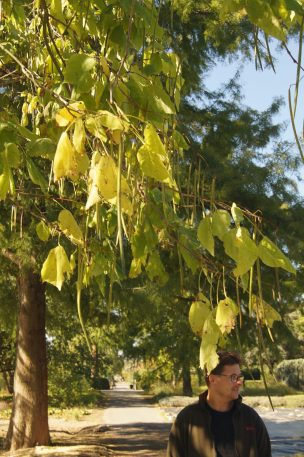 Herr Huben unter dem Beamtenbaum