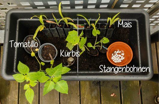 """Bepflanzung für den """"Basics Garten"""""""