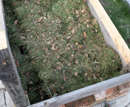 Es folgt eine dicke Schicht frischer Rasenschnitt.