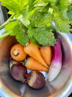 Frisches Gemüse Ende Oktober aus Pflanzkübeln