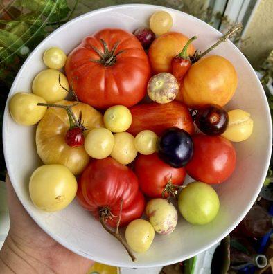 Tomatillos, Tomaten und Chili