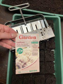 Blumenkohl Samen aus UK