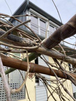 """Meine """"Dachkonstruktion"""" aus alten und neuen Bambusstangen"""