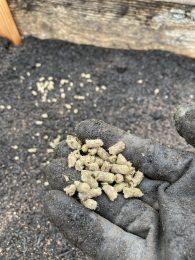 Pellets vom Bio Dünger mit Schafswolle