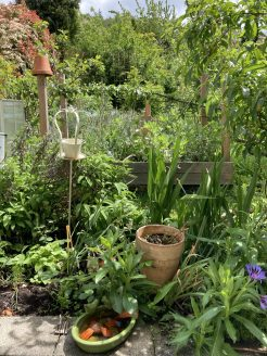 Garten an der Terrasse