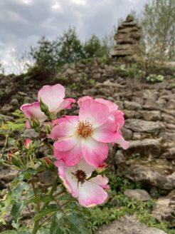 Im Platnersberg ist man umgeben vom Rosenduft Tausender Rosen