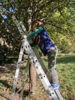 Helferlein beim Baumputzen.