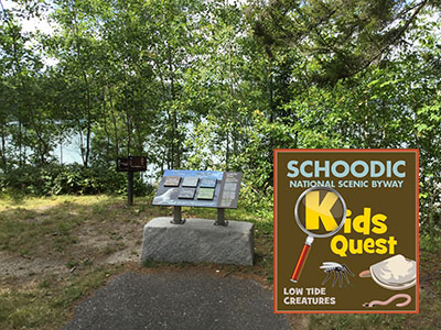 Kid's Quest: Low Tide Creatures