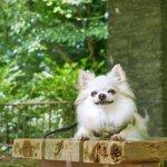犬の前足カクンが、ホメオパシーで治りました