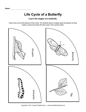 Life Cycles Worksheets #1