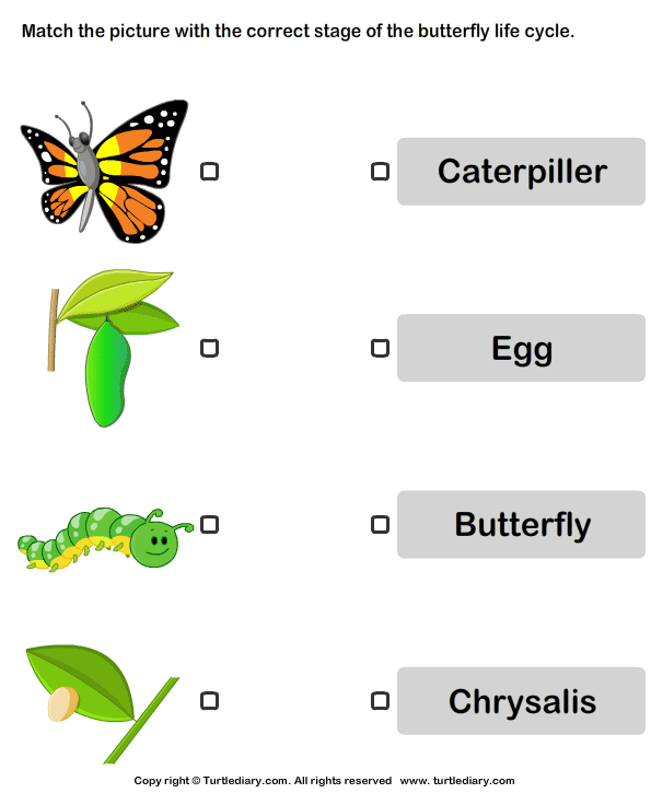 Life Cycles Worksheets #3