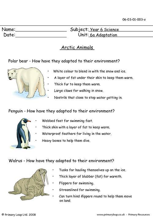 Polar Animals Worksheets #1