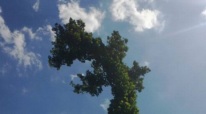 Gaby's dinosaur tree