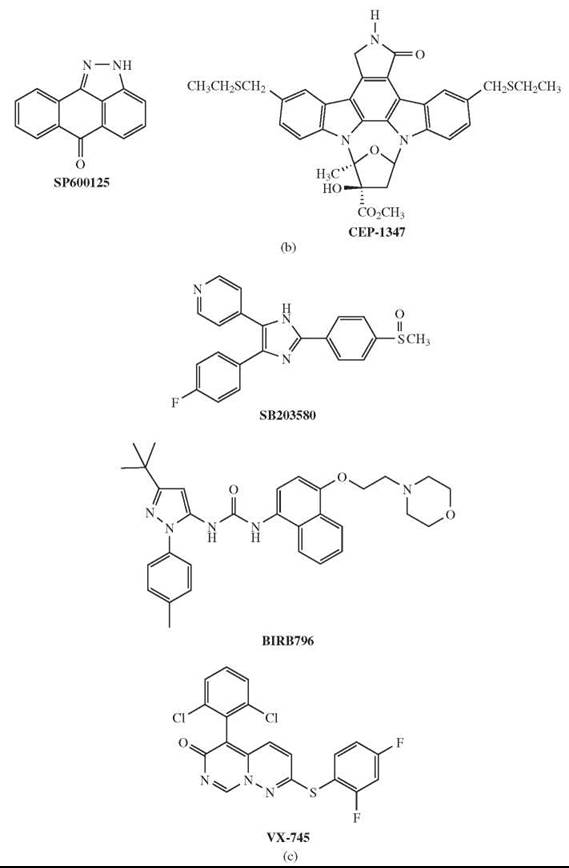 Mitogen-Activated Protein Kinases (MAPKs): ERKs, JNKs, and