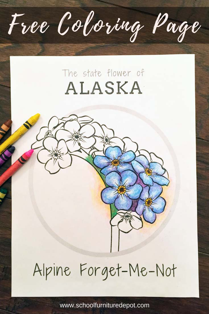 sfd blog  free state flower coloring pages
