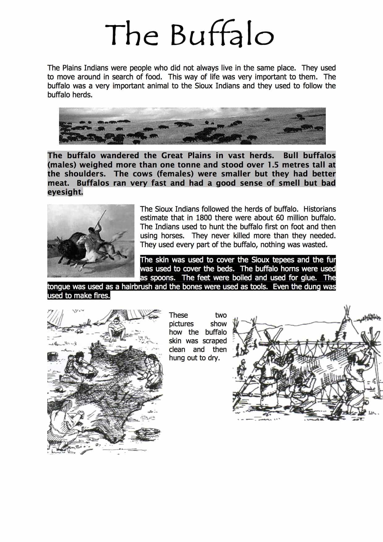 Native Americans Buffalo Information Sen Worksheet