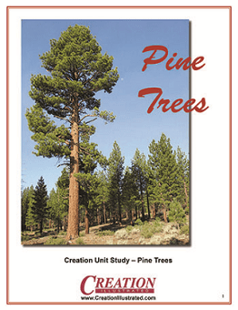 Pine Trees, one of the nature unit studies from Creation Illustrated
