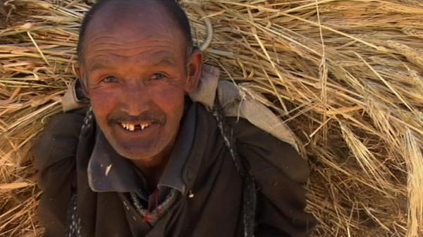 Old Man Straw 2