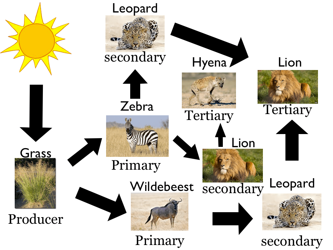 Food Chain Trophic Levels Worksheet