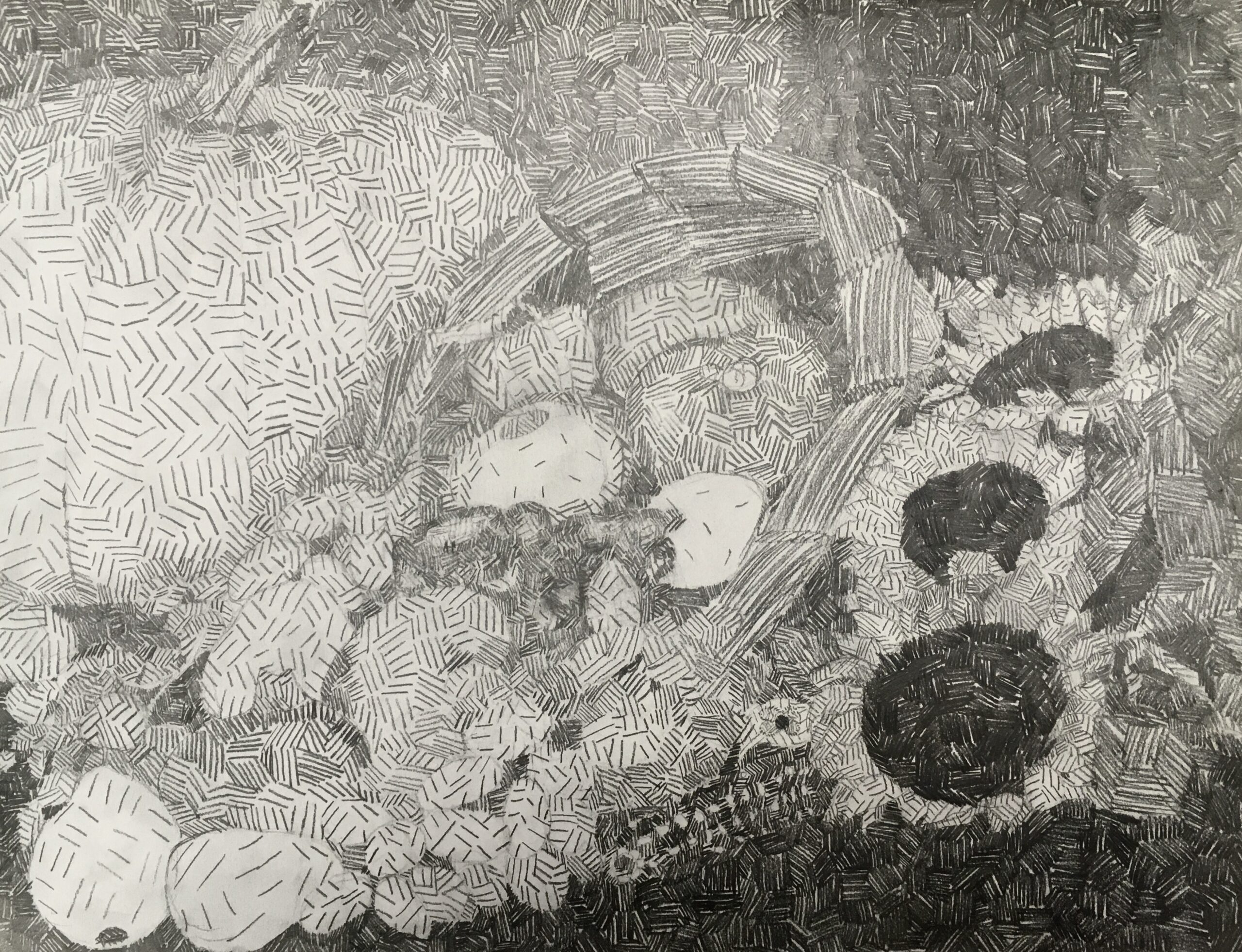 pen drawing of vegetables and flowers
