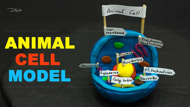 Animal Cell Model Project For School