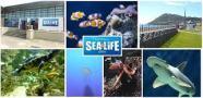 sea life bray