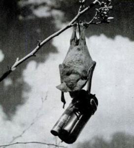 Bat Bomb - Weird Weapon