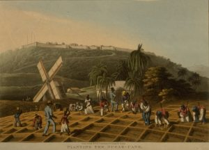 Slave Plantation. These grew crops such as sugar or cotton. They formed a large part of the Slave economy and triangular trade.