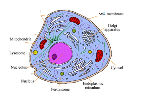 plant cell diagram with definitions dometic wiring cells & microscopes - school toolbox