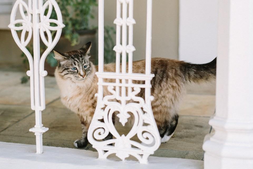 The cats of Schoone Oordt