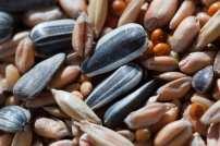 208 seeds web