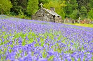 In Schottland gibt es viele Friedhöfe zu entdecken.