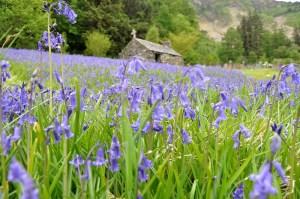 Der Monat Mai ist der beste Reisemonat für einen Urlaub in Schottland.