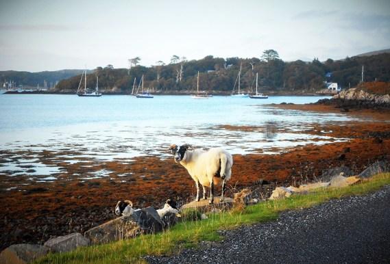 Arisaig in Schottland ist ein Geheimtipp und auf einer Reise durch Schottland kann man diesen Ort erkunden.